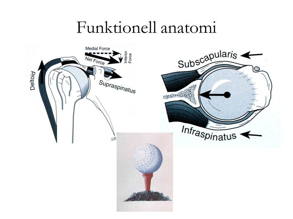 Funktionell anatomi