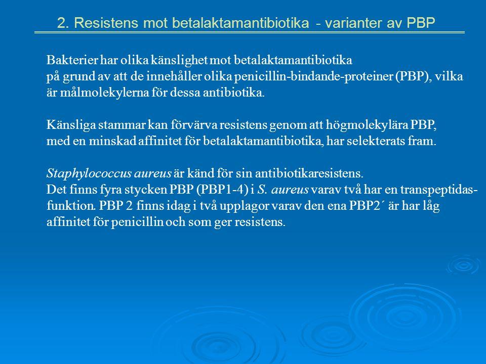 2. Resistens mot betalaktamantibiotika - varianter av PBP Bakterier har olika känslighet mot betalaktamantibiotika på grund av att de innehåller olika