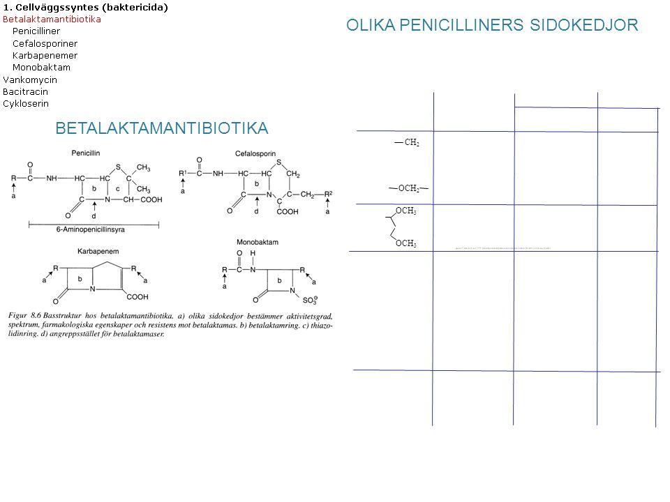 OLIKA PENICILLINERS SIDOKEDJOR OCH 3 BETALAKTAMANTIBIOTIKA CH 2 OCH 2
