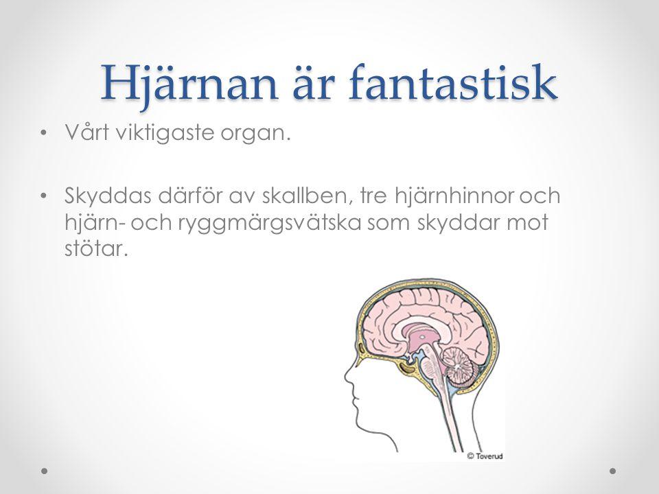 Hjärnans 4:a delar Storhjärnan Lillhjärnan Hjärnstammen Förlängda märgen