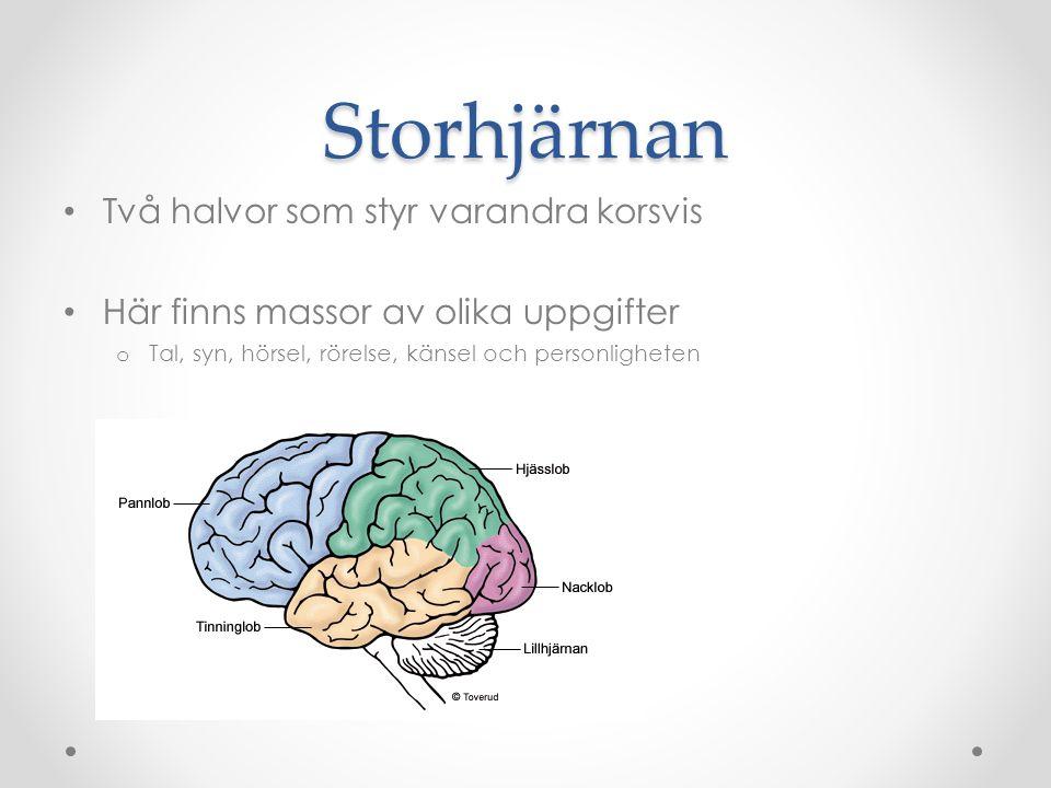 Hjärnhalvorna är olika Hjärnans halvor har olika egenskaper.