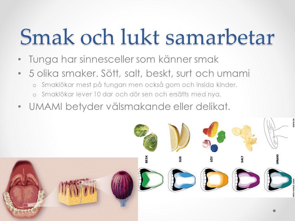 Luktsinnet Näsan känner lukter o Blandar de 5 grundsmakerna och bildar därför många fler smaker.