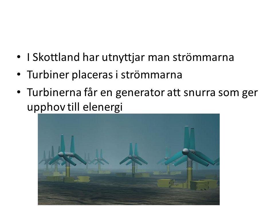 I Skottland har utnyttjar man strömmarna Turbiner placeras i strömmarna Turbinerna får en generator att snurra som ger upphov till elenergi