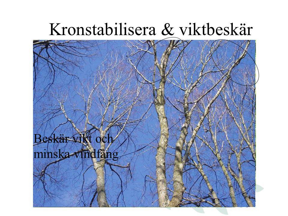 Kronstabilisera & viktbeskär Förbind stammarna med specialrep Fungerar som en båtförtöjning Beskär vikt och minska vindfång