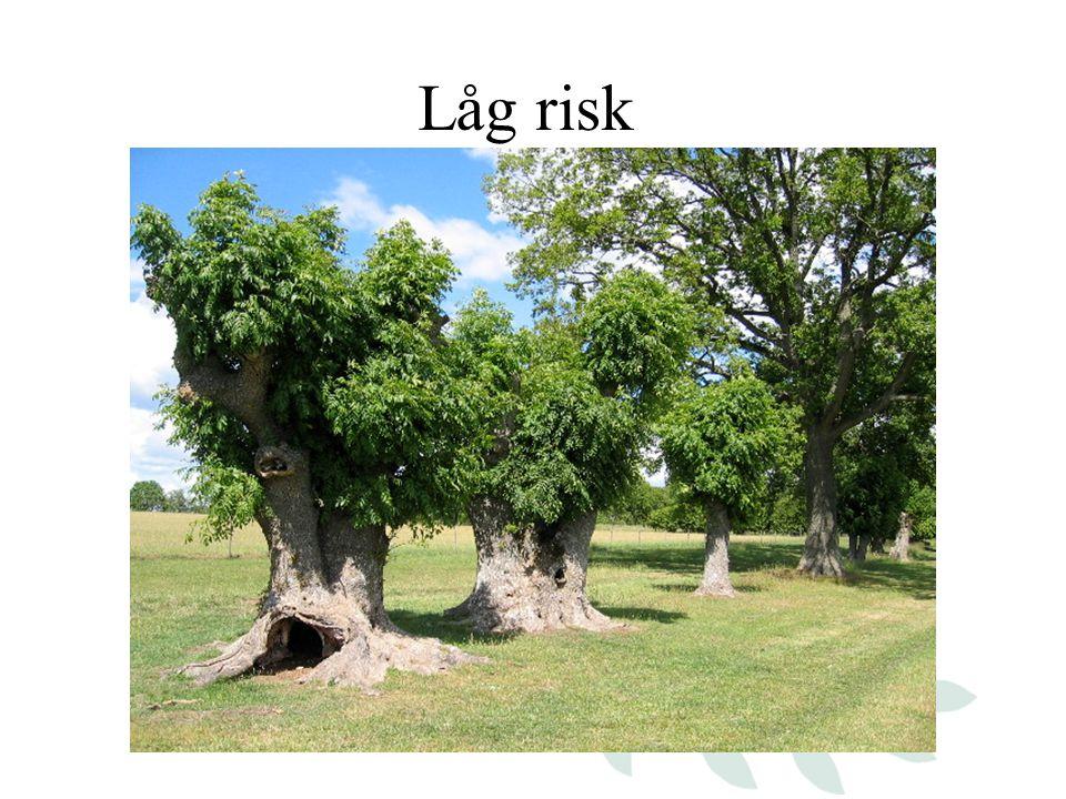 Låg risk