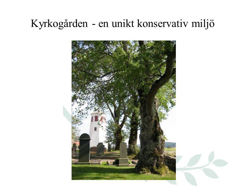 Kyrkogården - en unikt konservativ miljö