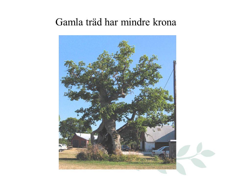 Gamla träd har mindre krona