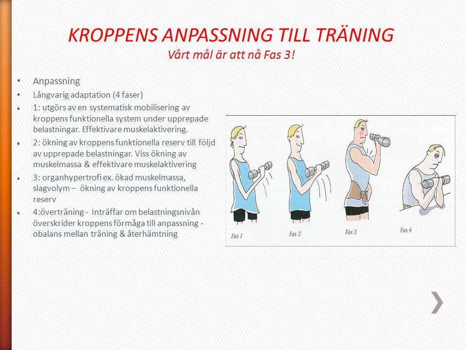 KROPPENS ANPASSNING TILL TRÄNING Vårt mål är att nå Fas 3! Anpassning Långvarig adaptation (4 faser) 1: utgörs av en systematisk mobilisering av kropp