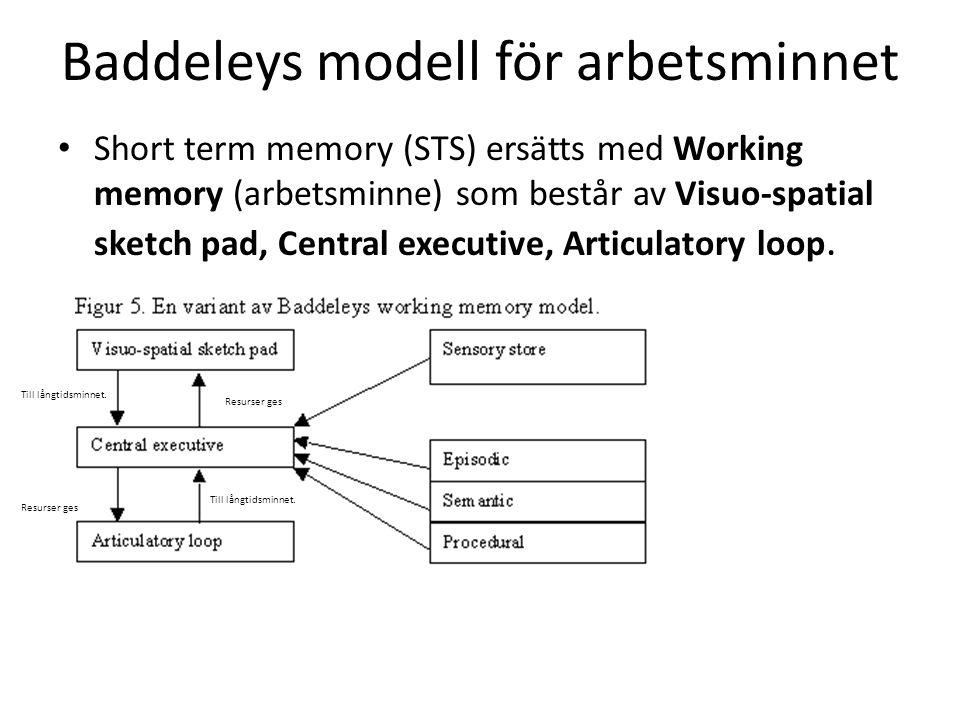 Baddeleys modell för arbetsminnet Short term memory (STS) ersätts med Working memory (arbetsminne) som består av Visuo-spatial sketch pad, Central exe