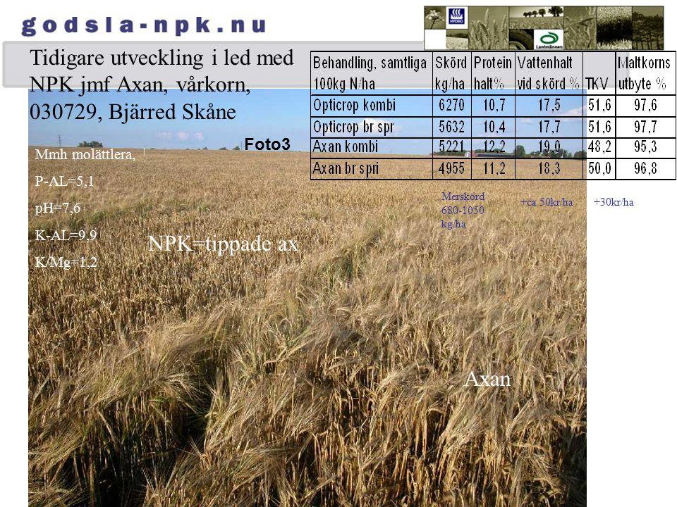 Tidigare utveckling i led med NPK jmf Axan, vårkorn, 030729, Bjärred Skåne Foto3 Mmh molättlera, P-AL=5,1 pH=7,6 K-AL=9,9 K/Mg=1,2 NPK=tippade ax Axan
