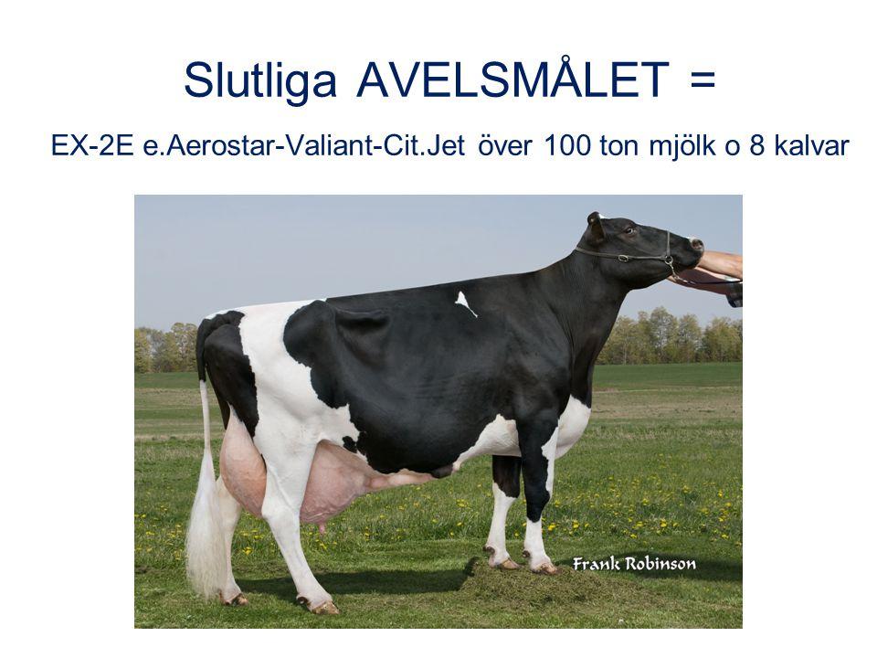 1 Slutliga AVELSMÅLET = EX-2E e.Aerostar-Valiant-Cit.Jet över 100 ton mjölk o 8 kalvar