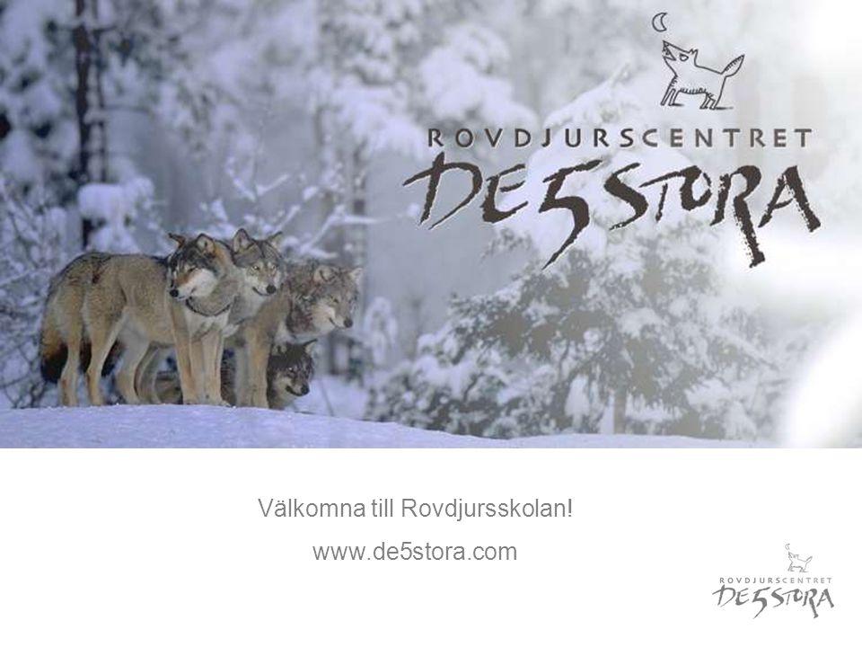 Välkomna till Rovdjursskolan! www.de5stora.com
