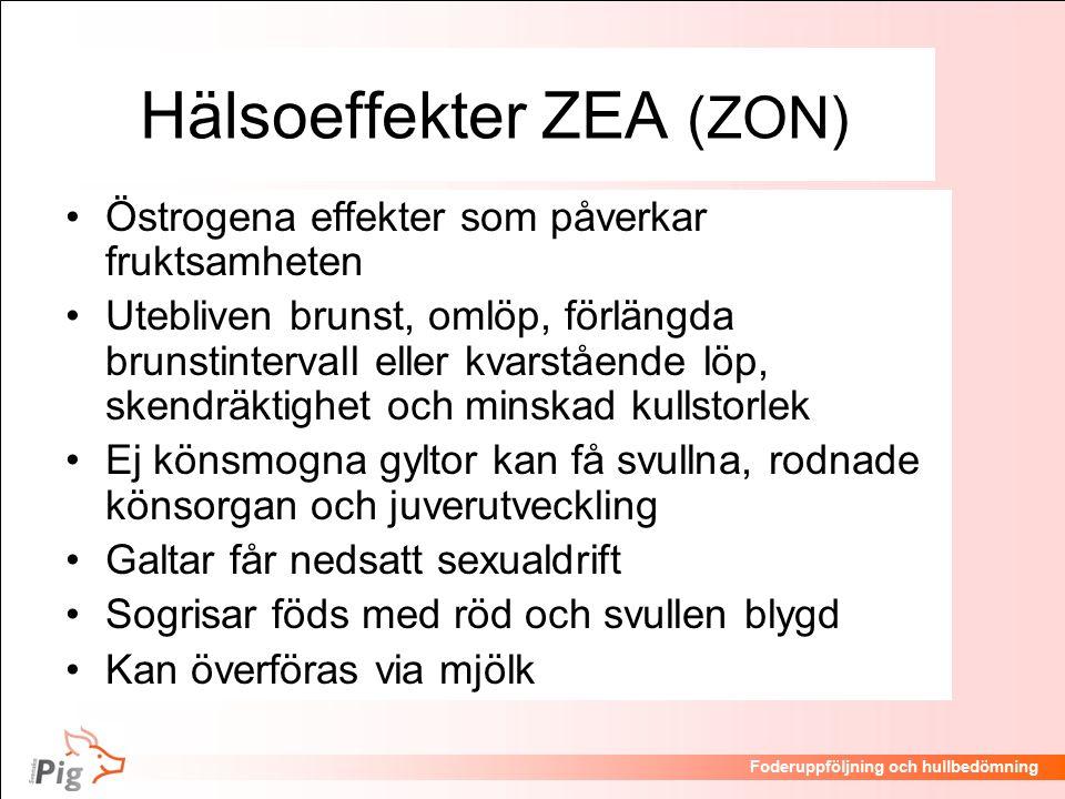Föreläsningsrubrik / temaFoderuppföljning och hullbedömning Hälsoeffekter ZEA (ZON) Östrogena effekter som påverkar fruktsamheten Utebliven brunst, omlöp, förlängda brunstintervall eller kvarstående löp, skendräktighet och minskad kullstorlek Ej könsmogna gyltor kan få svullna, rodnade könsorgan och juverutveckling Galtar får nedsatt sexualdrift Sogrisar föds med röd och svullen blygd Kan överföras via mjölk