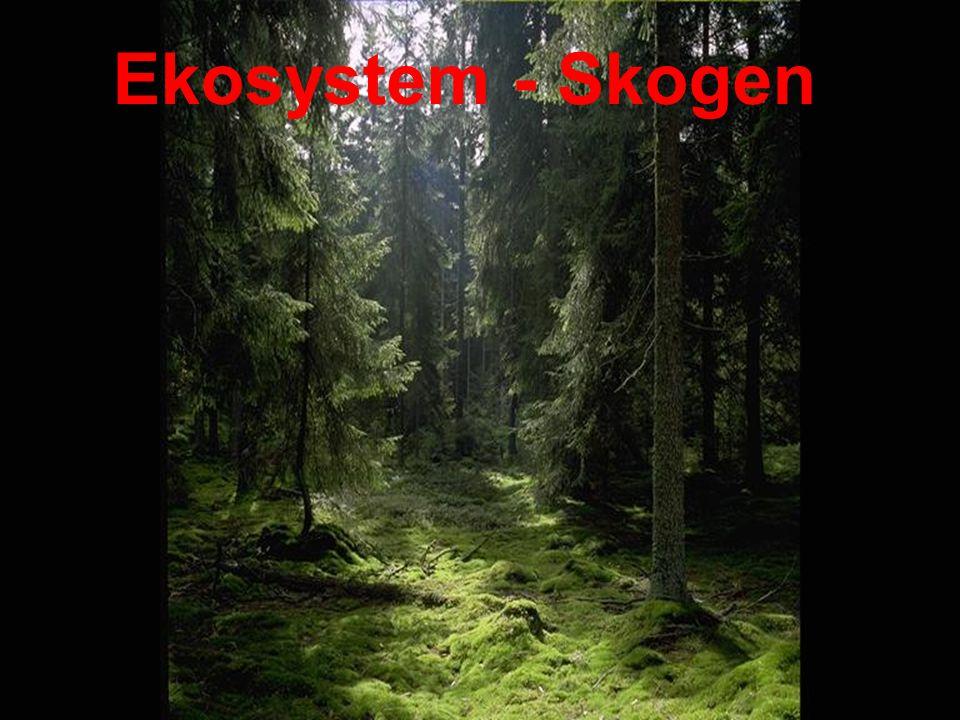 Skogen som ett ekosystem Skogarna har funnits i ca 12 000 år Producerar syre Binder koldioxid Boplatser/skydd Näring Ekonomi
