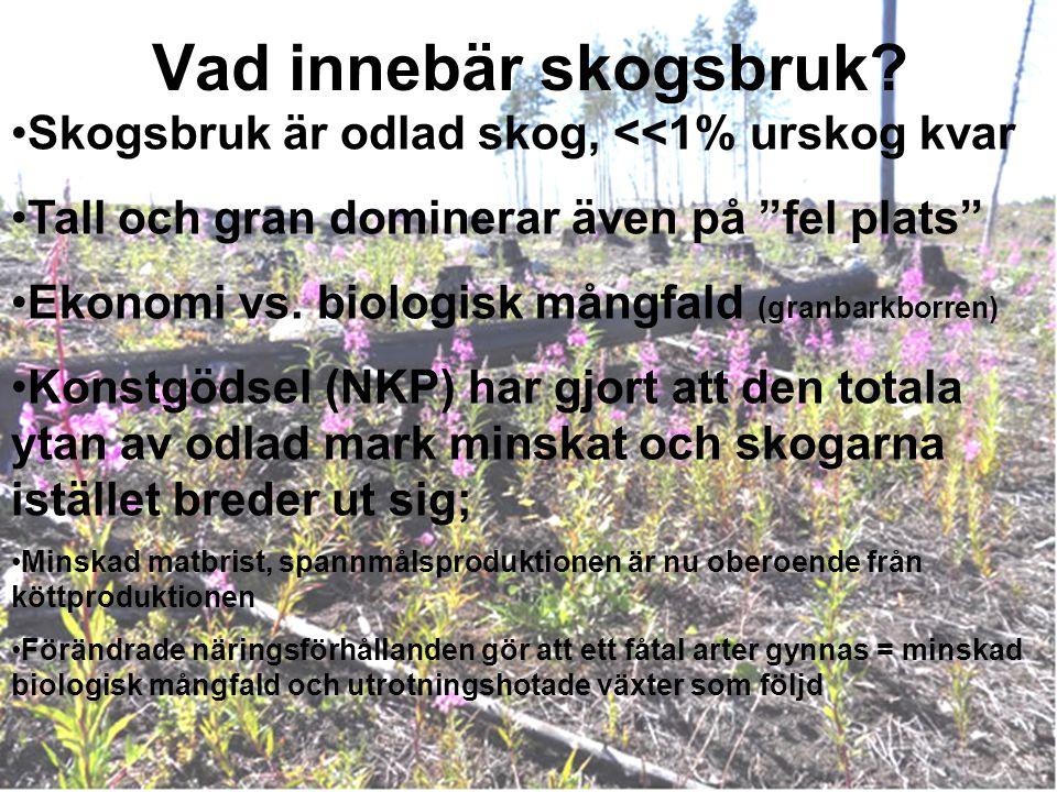 """Vad innebär skogsbruk? Skogsbruk är odlad skog, <<1% urskog kvar Tall och gran dominerar även på """"fel plats"""" Ekonomi vs. biologisk mångfald (granbarkb"""