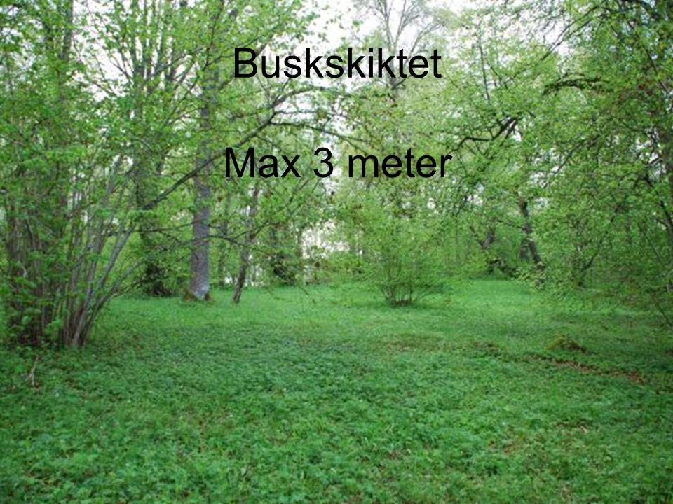 Buskskiktet Max 3 meter