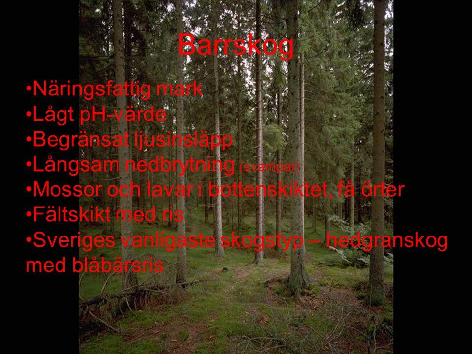 Barrskog Näringsfattig mark Lågt pH-värde Begränsat ljusinsläpp Långsam nedbrytning (svampar) Mossor och lavar i bottenskiktet, få örter Fältskikt med