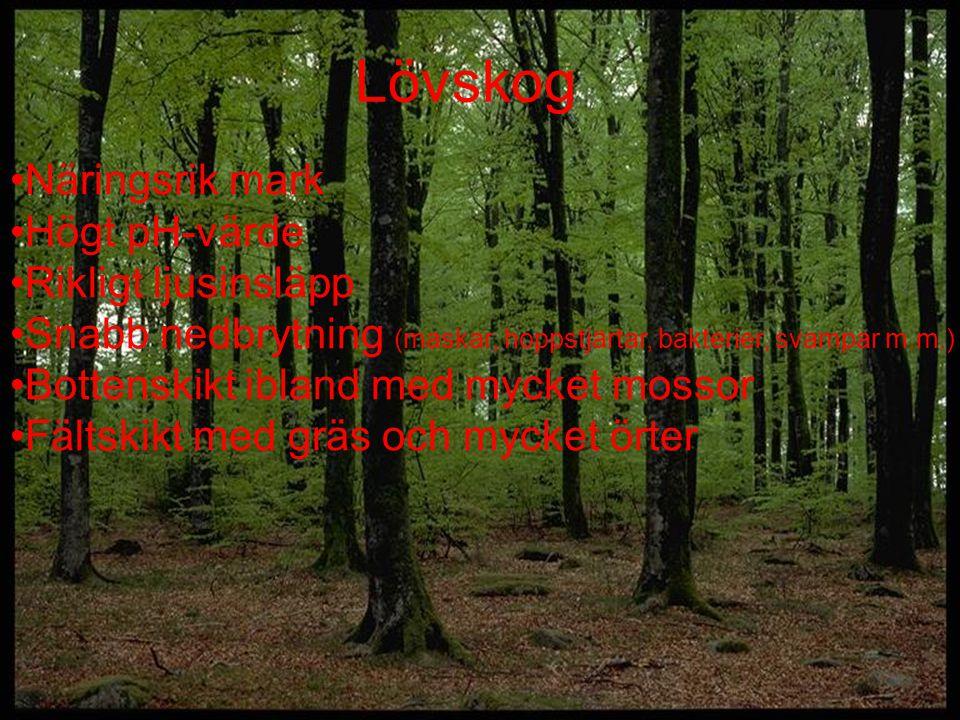 Lövskog Näringsrik mark Högt pH-värde Rikligt ljusinsläpp Snabb nedbrytning (maskar, hoppstjärtar, bakterier, svampar m.m.) Bottenskikt ibland med myc