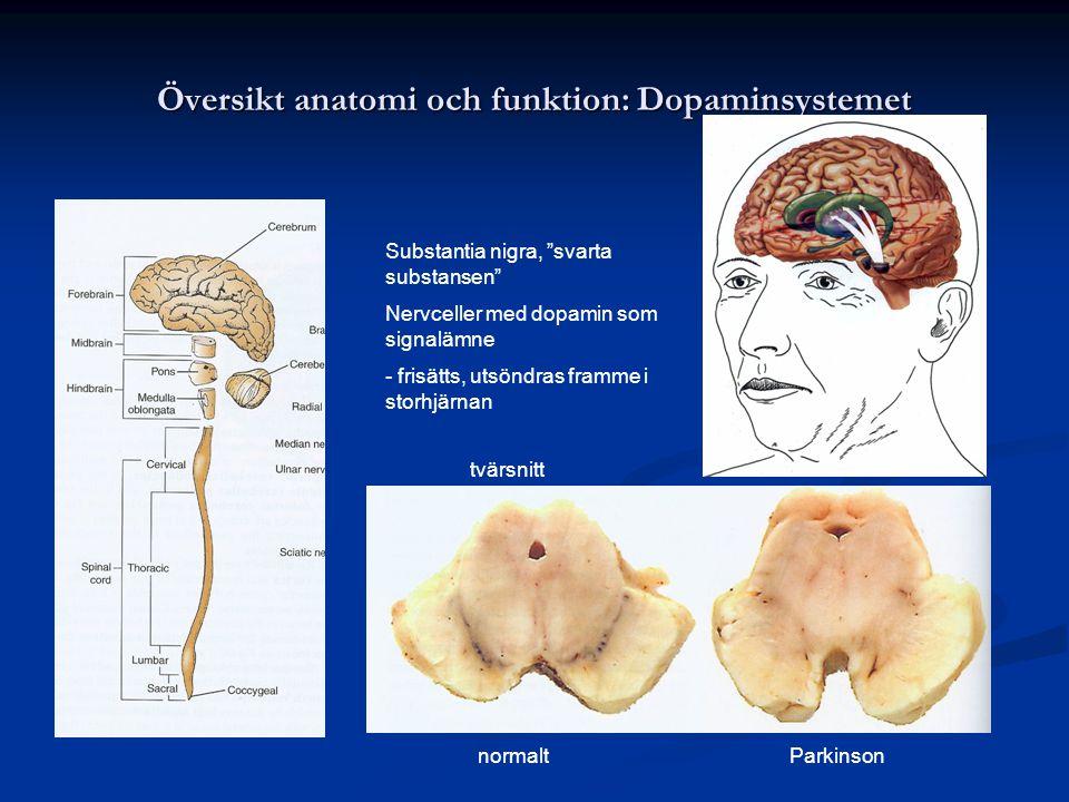 """Översikt anatomi och funktion: Dopaminsystemet Substantia nigra, """"svarta substansen"""" Nervceller med dopamin som signalämne - frisätts, utsöndras framm"""