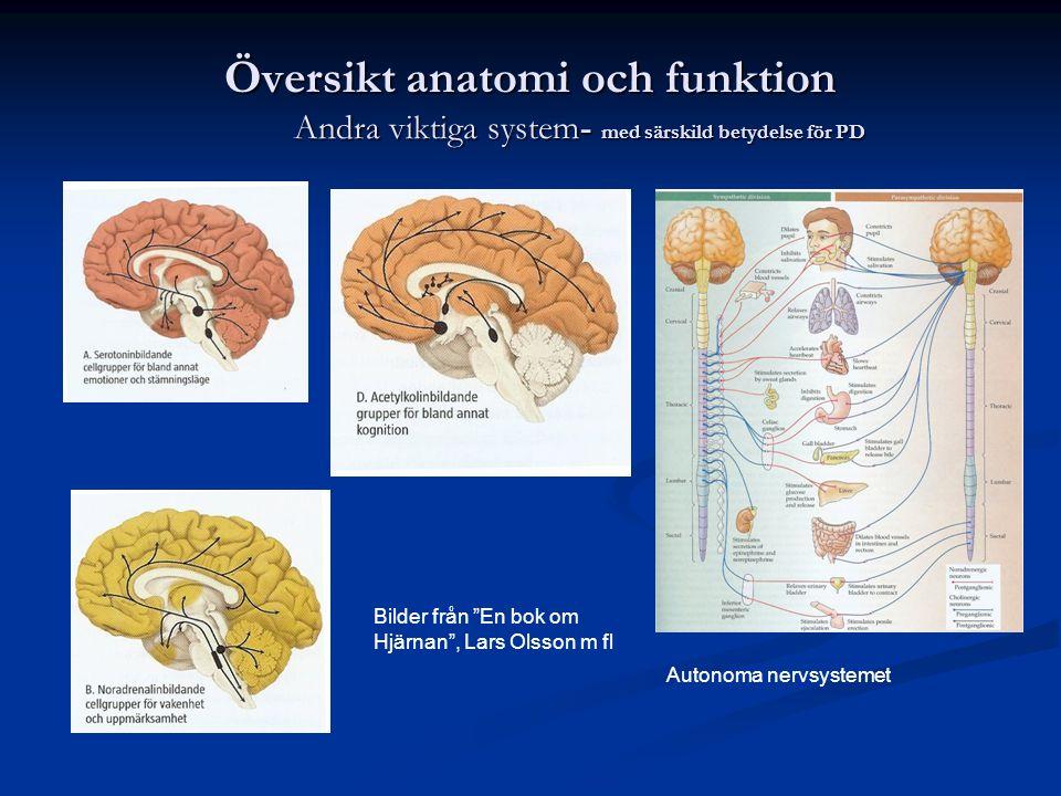 """Översikt anatomi och funktion Andra viktiga system- med särskild betydelse för PD Bilder från """"En bok om Hjärnan"""", Lars Olsson m fl Autonoma nervsyste"""