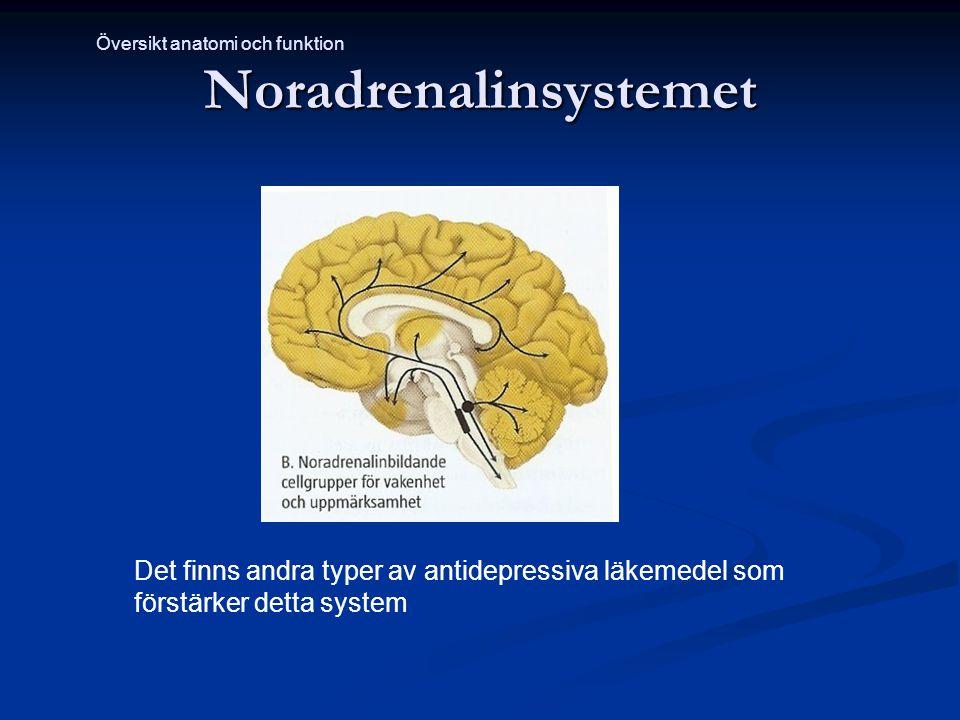 Noradrenalinsystemet Det finns andra typer av antidepressiva läkemedel som förstärker detta system Översikt anatomi och funktion