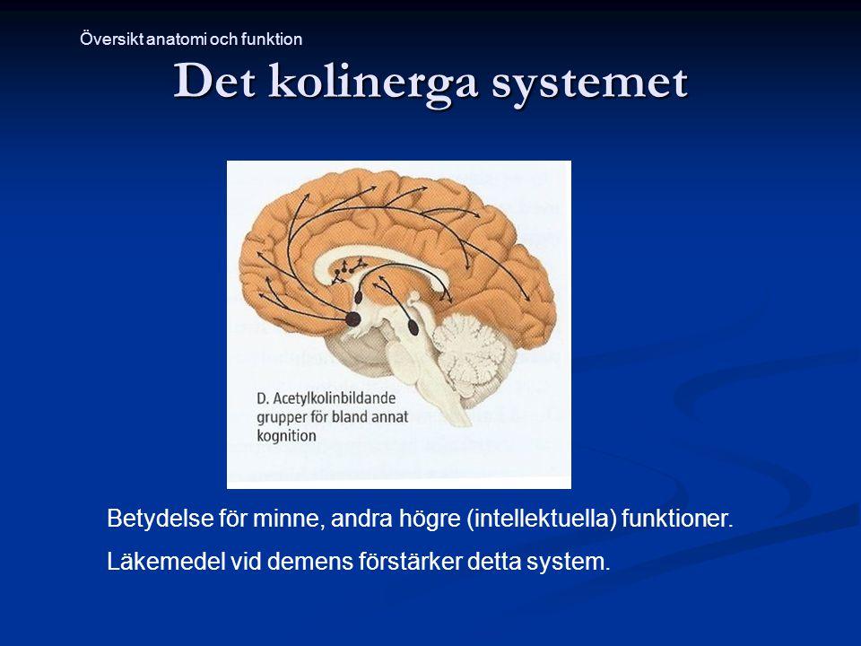 Det kolinerga systemet Betydelse för minne, andra högre (intellektuella) funktioner. Läkemedel vid demens förstärker detta system. Översikt anatomi oc