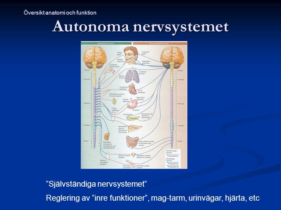 """Autonoma nervsystemet """"Självständiga nervsystemet"""" Reglering av """"inre funktioner"""", mag-tarm, urinvägar, hjärta, etc Översikt anatomi och funktion"""