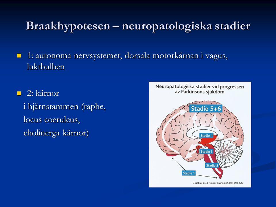 Braakhypotesen – neuropatologiska stadier 1: autonoma nervsystemet, dorsala motorkärnan i vagus, luktbulben 1: autonoma nervsystemet, dorsala motorkär