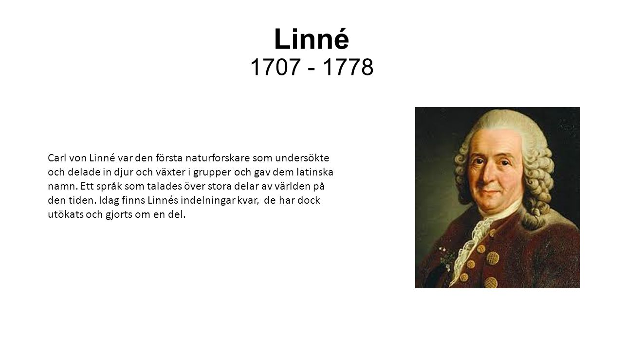 Linné 1707 - 1778 Carl von Linné var den första naturforskare som undersökte och delade in djur och växter i grupper och gav dem latinska namn. Ett sp