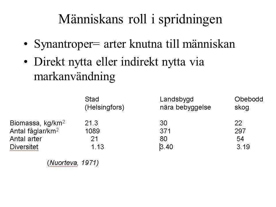Människans roll i spridningen Synantroper= arter knutna till människan Direkt nytta eller indirekt nytta via markanvändning