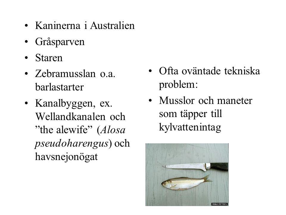 """Kaninerna i Australien Gråsparven Staren Zebramusslan o.a. barlastarter Kanalbyggen, ex. Wellandkanalen och """"the alewife"""" (Alosa pseudoharengus) och h"""