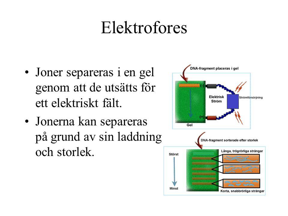 Elektrofores Joner separeras i en gel genom att de utsätts för ett elektriskt fält. Jonerna kan separeras på grund av sin laddning och storlek.
