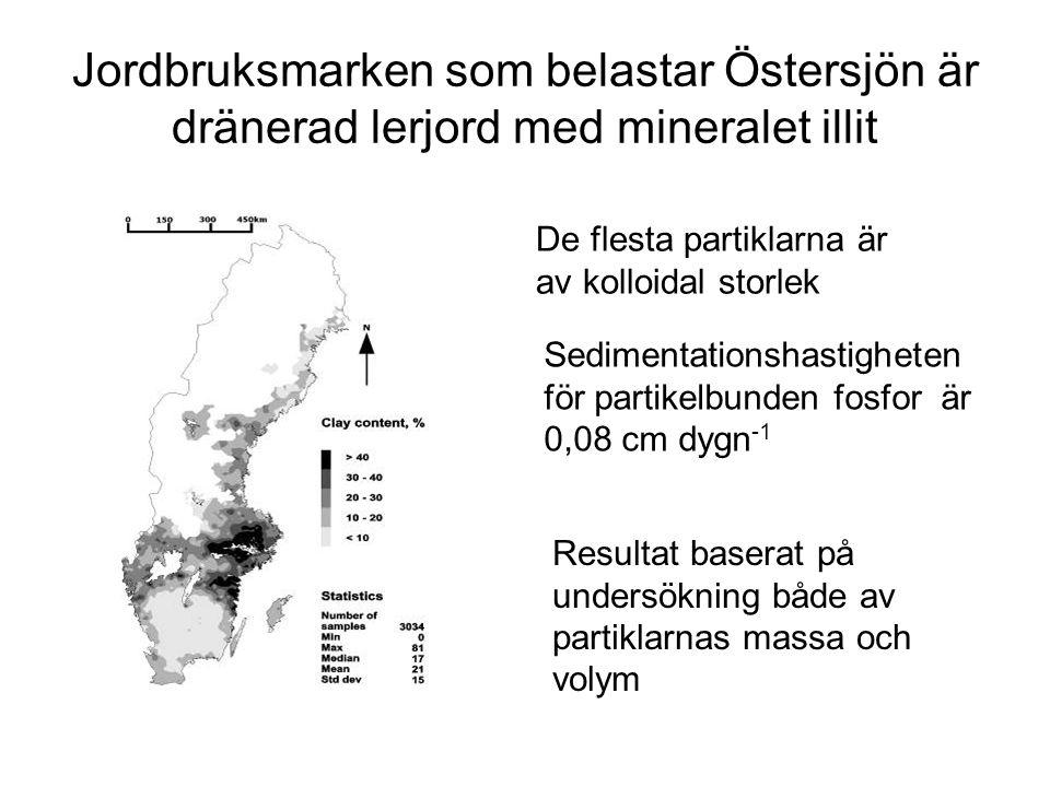 Jordbruksmarken som belastar Östersjön är dränerad lerjord med mineralet illit De flesta partiklarna är av kolloidal storlek Sedimentationshastigheten för partikelbunden fosfor är 0,08 cm dygn -1 Resultat baserat på undersökning både av partiklarnas massa och volym