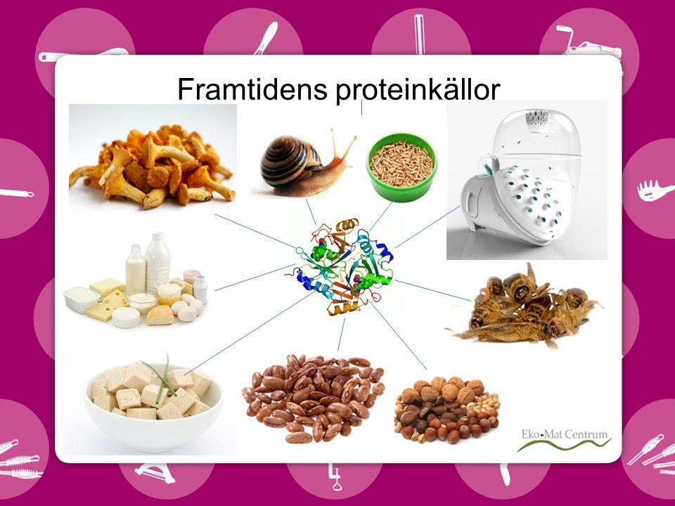 Framtidens proteinkällor