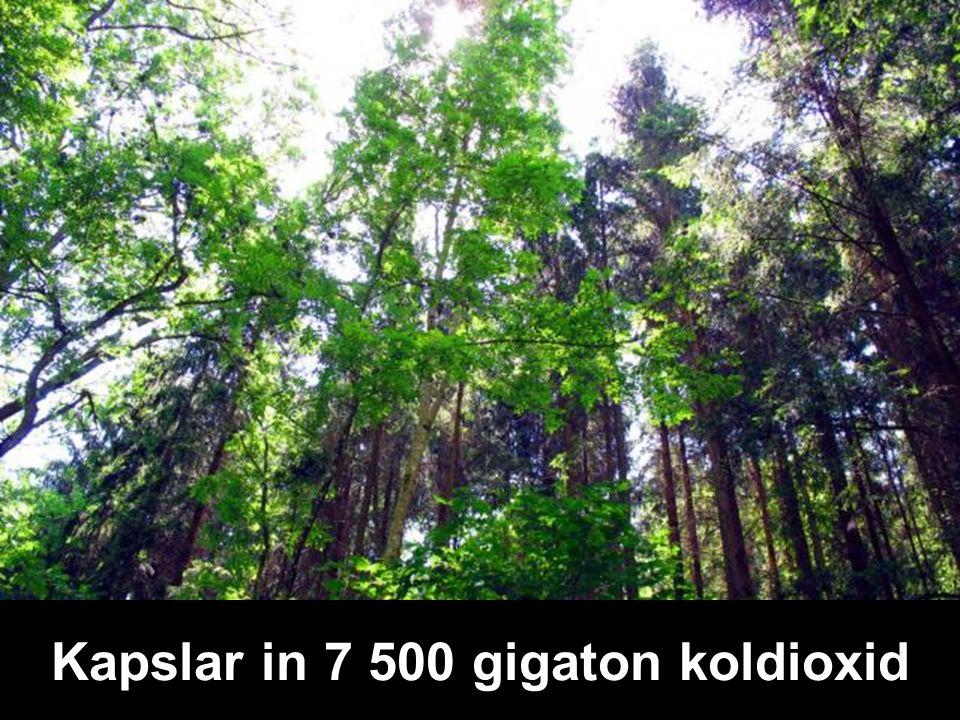 Kapslar in 7 500 gigaton koldioxid