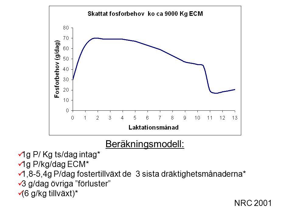 Beräkningsmodell: 1g P/ Kg ts/dag intag* 1g P/kg/dag ECM* 1,8-5,4g P/dag fostertillväxt de 3 sista dräktighetsmånaderna* 3 g/dag övriga förluster (6 g/kg tillväxt)* NRC 2001