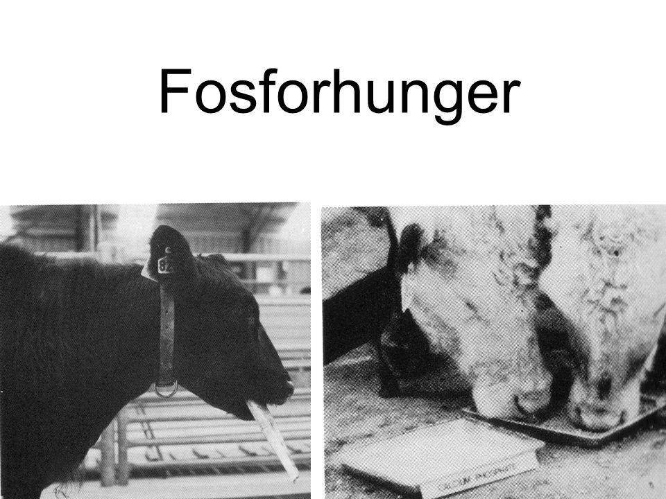 Fosforhunger