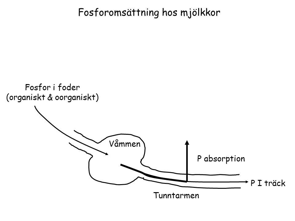 P I träck Fosfor i foder (organiskt & oorganiskt) Tunntarmen Våmmen P absorption Fosforomsättning hos mjölkkor