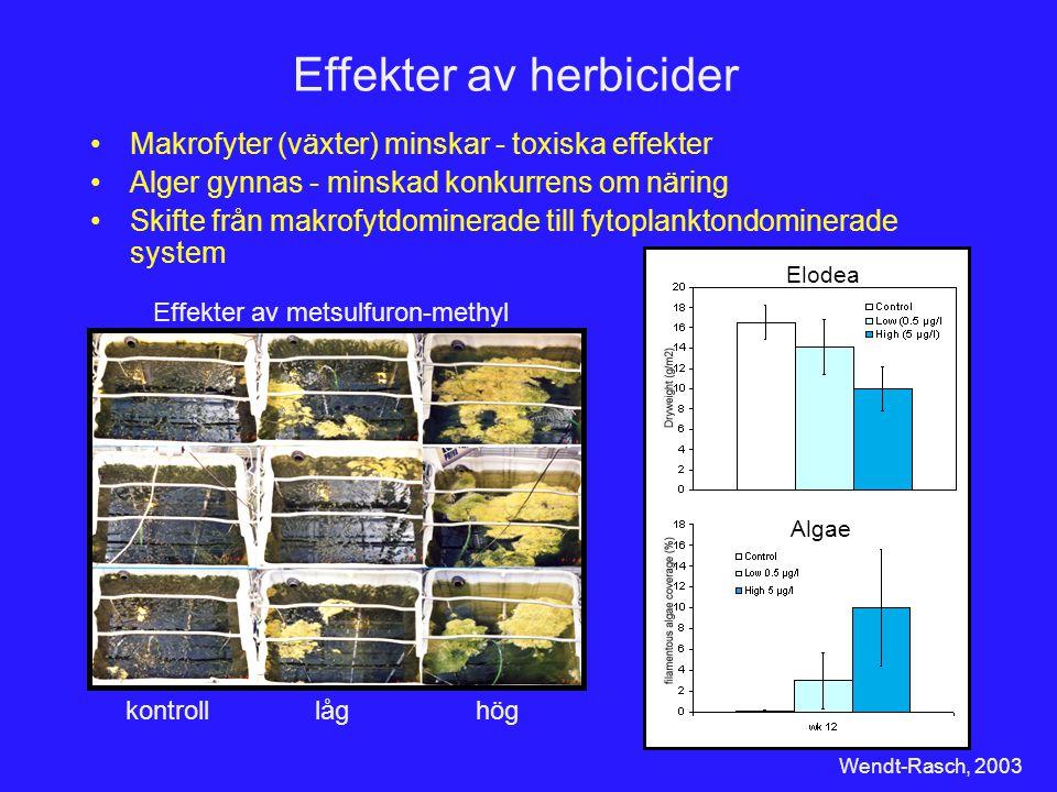 Effekter av herbicider Elodea Algae Wendt-Rasch, 2003 Makrofyter (växter) minskar - toxiska effekter Alger gynnas - minskad konkurrens om näring Skift