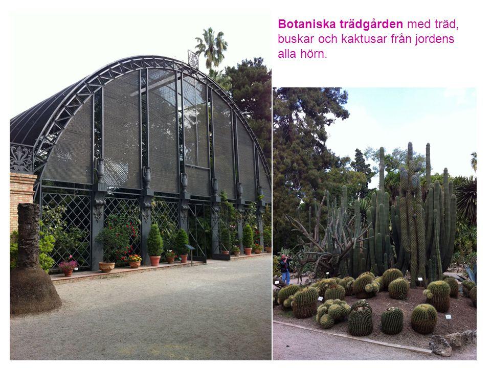 Botaniska trädgården med träd, buskar och kaktusar från jordens alla hörn.