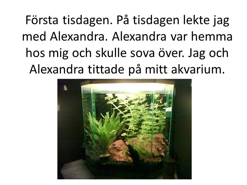 Första tisdagen. På tisdagen lekte jag med Alexandra. Alexandra var hemma hos mig och skulle sova över. Jag och Alexandra tittade på mitt akvarium.