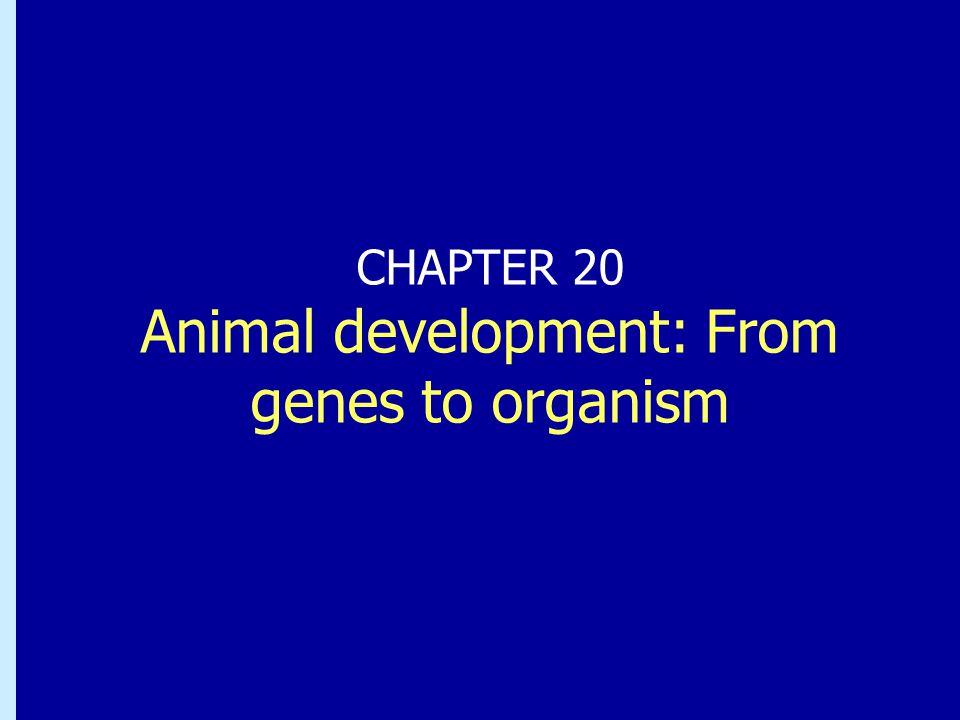 Modellorganismer för studier av embryonalutvecklingen Bl.a.