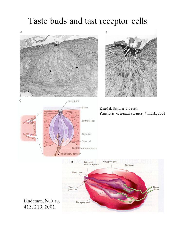 Taste buds and tast receptor cells Kandel, Schwartz, Jesell. Principles of neural science, 4th Ed., 2001 Lindeman, Nature, 413, 219, 2001.