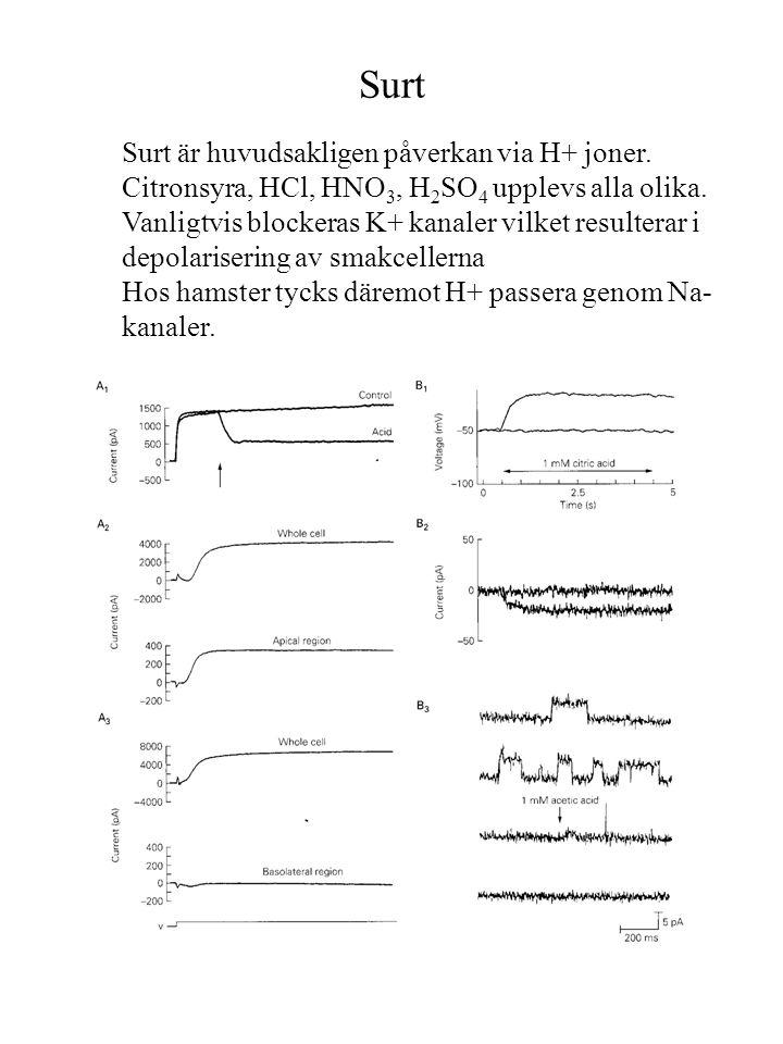 Surt Surt är huvudsakligen påverkan via H+ joner. Citronsyra, HCl, HNO 3, H 2 SO 4 upplevs alla olika. Vanligtvis blockeras K+ kanaler vilket resulter