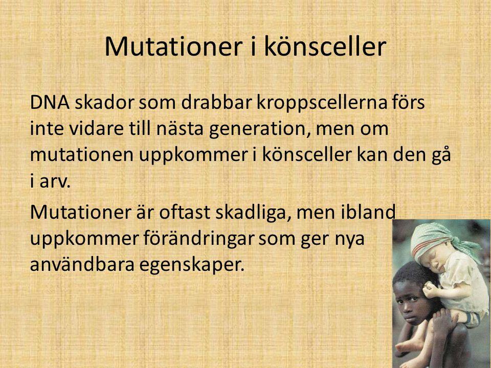 Mutationer i könsceller DNA skador som drabbar kroppscellerna förs inte vidare till nästa generation, men om mutationen uppkommer i könsceller kan den