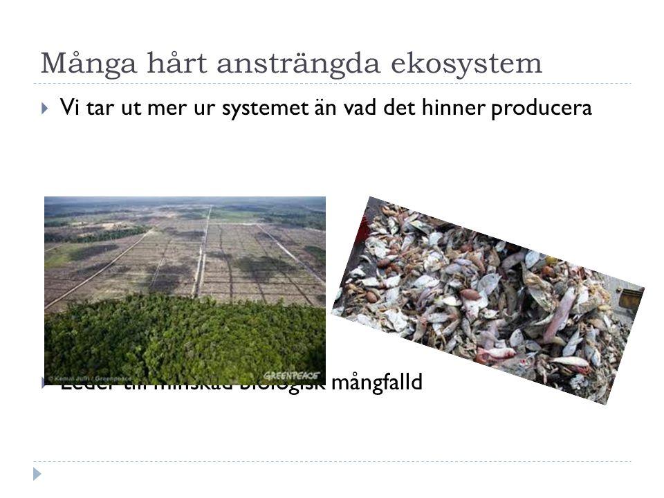 Många hårt ansträngda ekosystem  Vi tar ut mer ur systemet än vad det hinner producera  Leder till minskad biologisk mångfalld