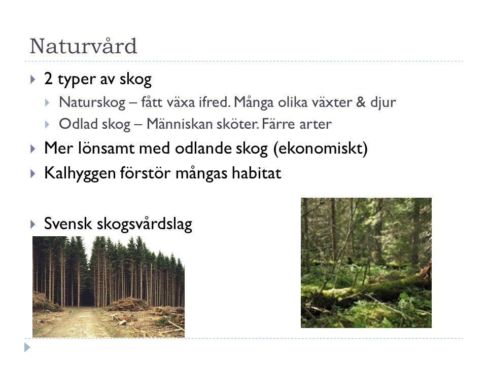 Naturvård  2 typer av skog  Naturskog – fått växa ifred.