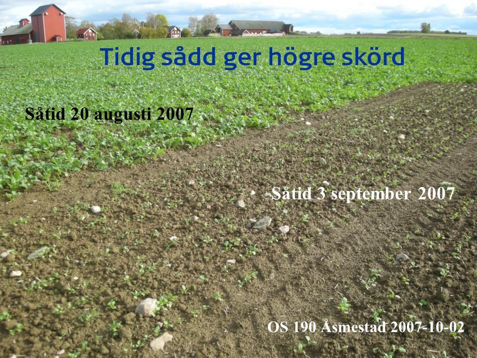 Svenska etableringsresultat 2007: skörd (kg/ha) Sten-LillaRock-LönnsBjer-Medel stuguBöslidnebytorp A = Normalt plöjningsdjup4210404048103230 3904 B = Grunt plöjningsdjup871039410110297 C = Ytlig bearbetning969893104107100 D = Kultivator 10-15 cm98 101104105101 E = Bredsådd, Carrier999194104 98 F = Bredsådd, kultivator999699105101100 G = Djupluckring, ytlig bearbetning 102 R2-4141 2007