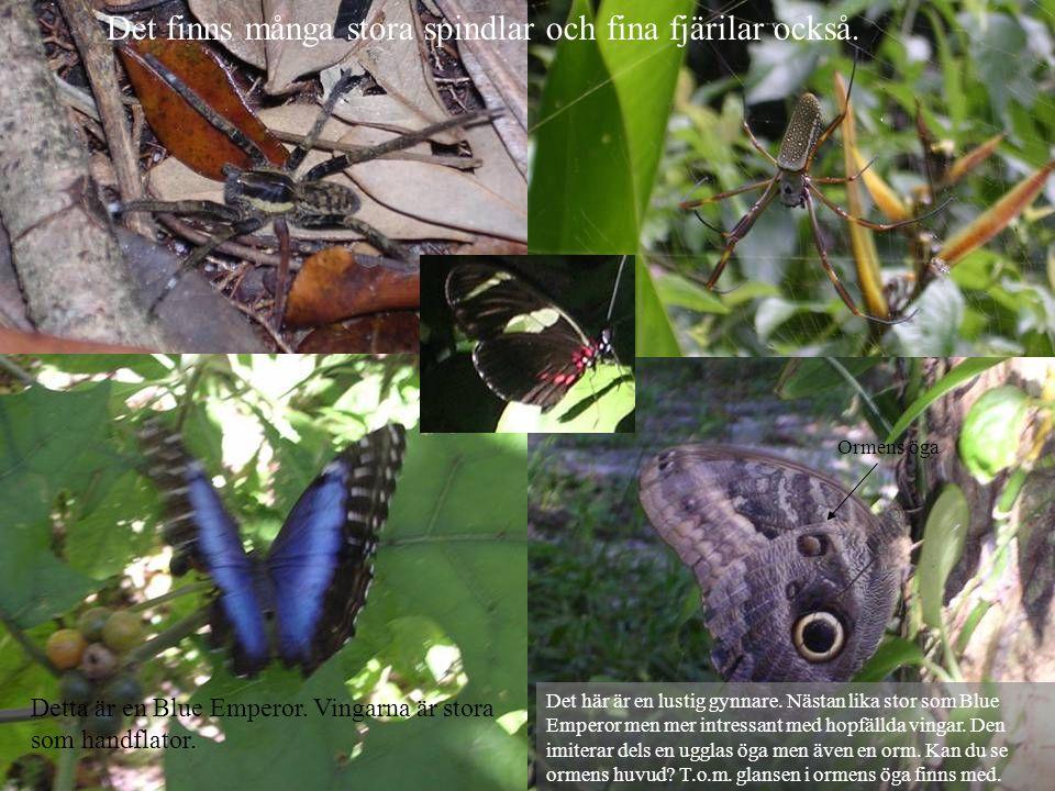 Det finns många stora spindlar och fina fjärilar också.