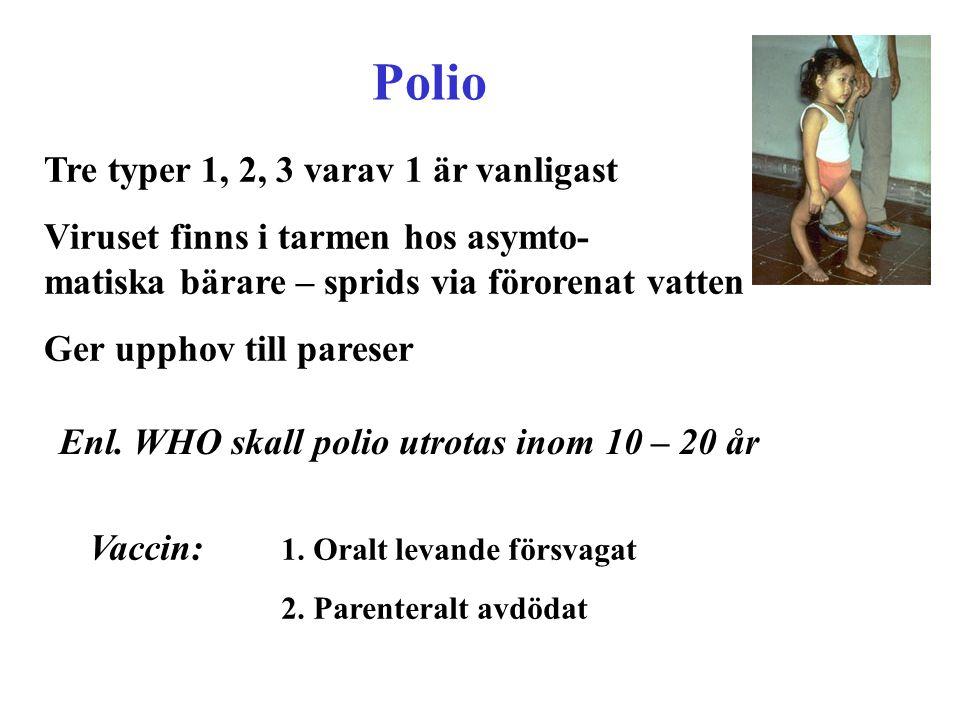 Polio Tre typer 1, 2, 3 varav 1 är vanligast Viruset finns i tarmen hos asymto- matiska bärare – sprids via förorenat vatten Ger upphov till pareser E